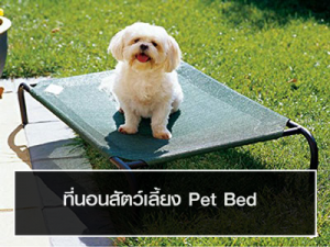 ที่นอนสัตว์เลี้ยง Pet Bed
